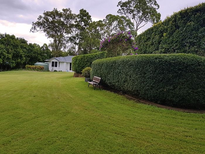 backyard Brisbane garden